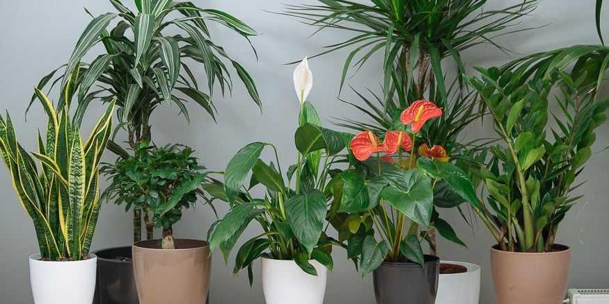 Φυτώρια Παπάζογλου